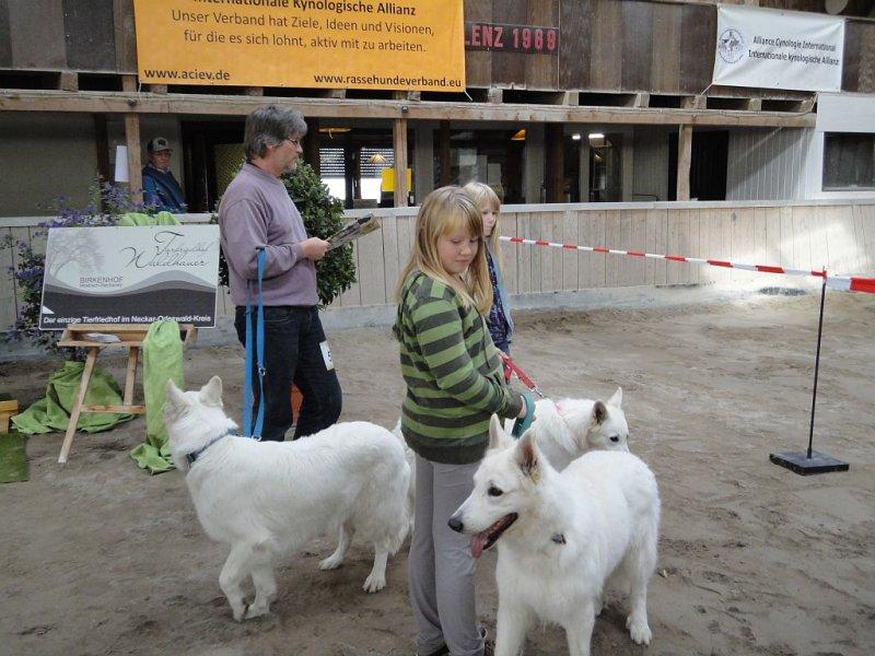 amy-ausstellung-schefflenz-02-09-2012-109