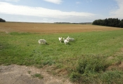 amy-ausstellung-schefflenz-02-09-2012-048