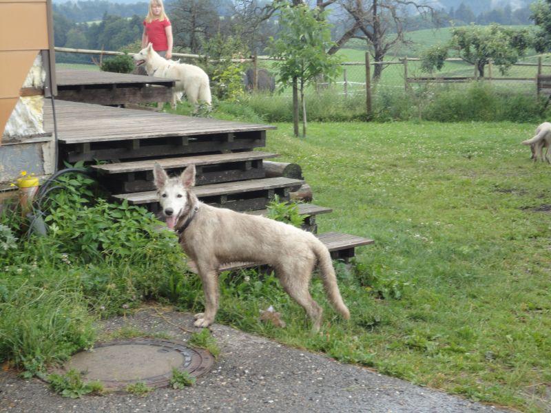 welpentreff-01-07-2012-039