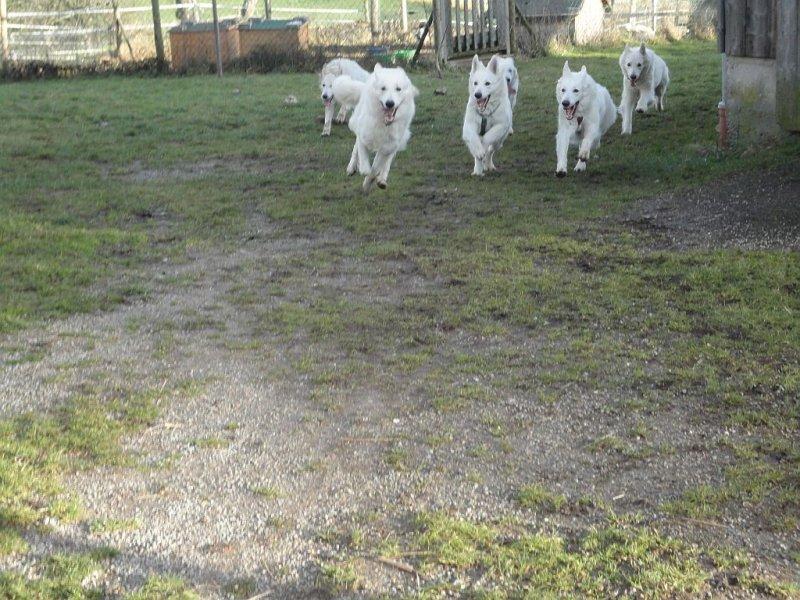 amy-ausstellung-schefflenz-02-09-2012-029