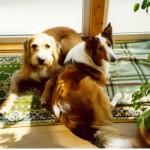98-04-07_Griffo und Ricka