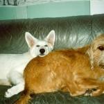 Griffo und Rudi3